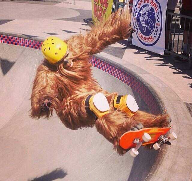 vans, may the 4th be with you, skate, chewbacca, star wars